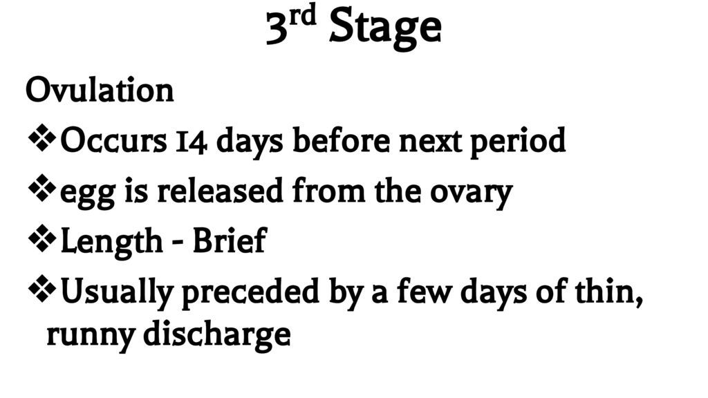 Menstrual Cycle From day one of a female's period to day one of her