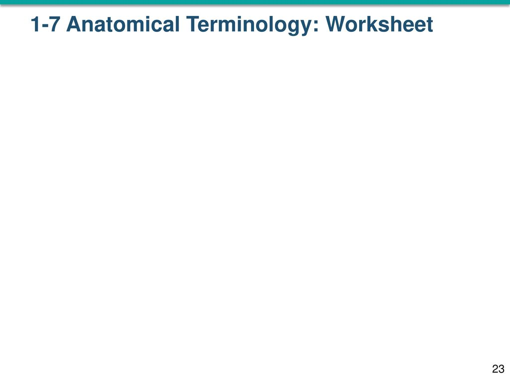 These slides (you will usually print these yourself) Worksheet ...