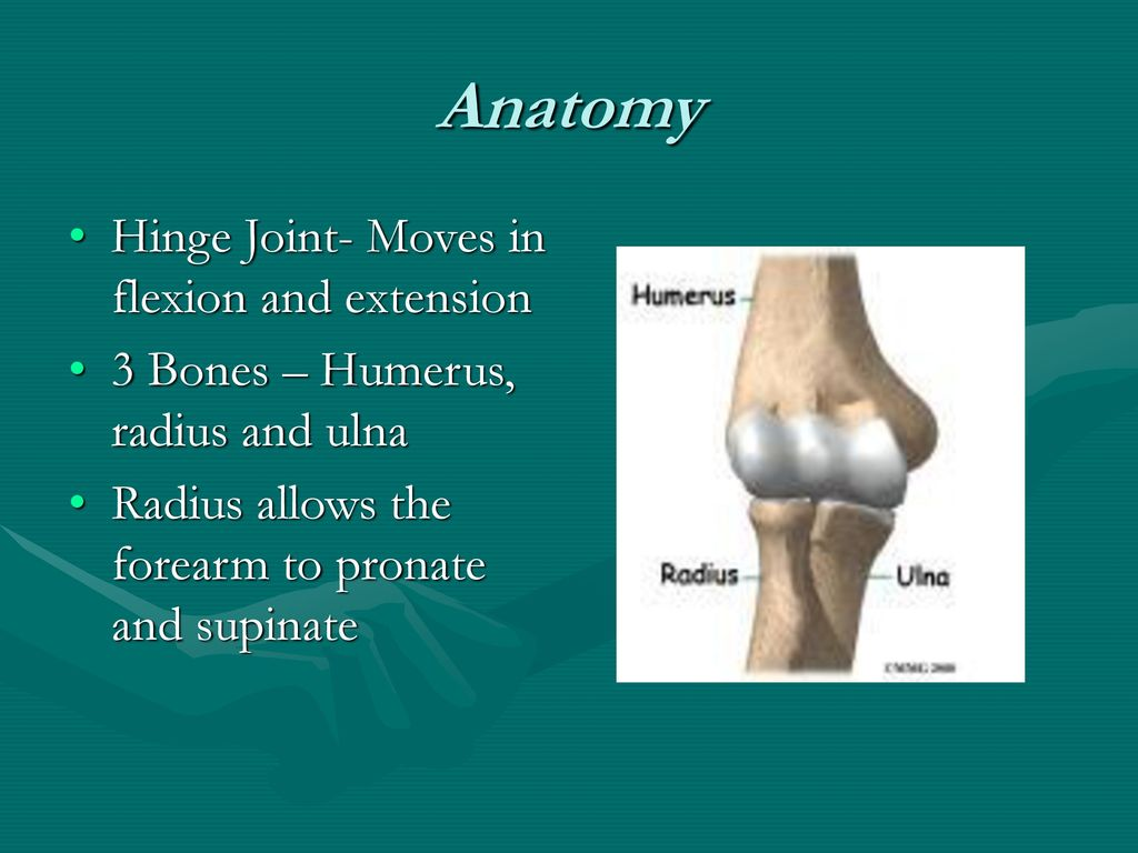 Elbow Injuries. - ppt download