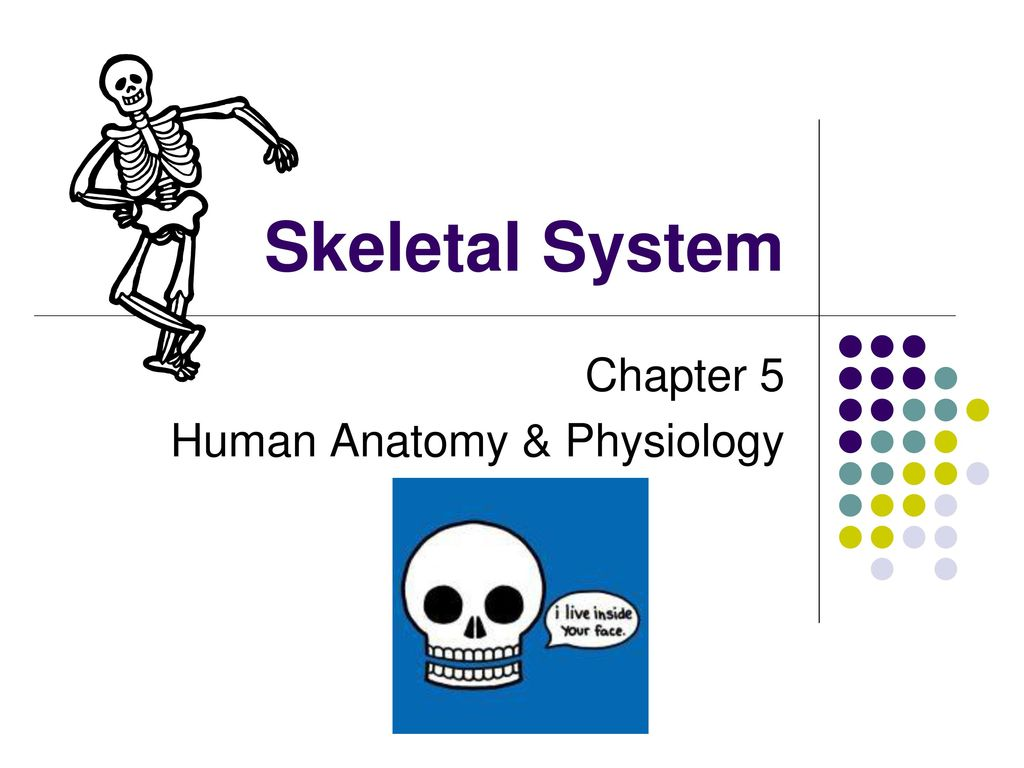 Chapter 5 Human Anatomy & Physiology - ppt download