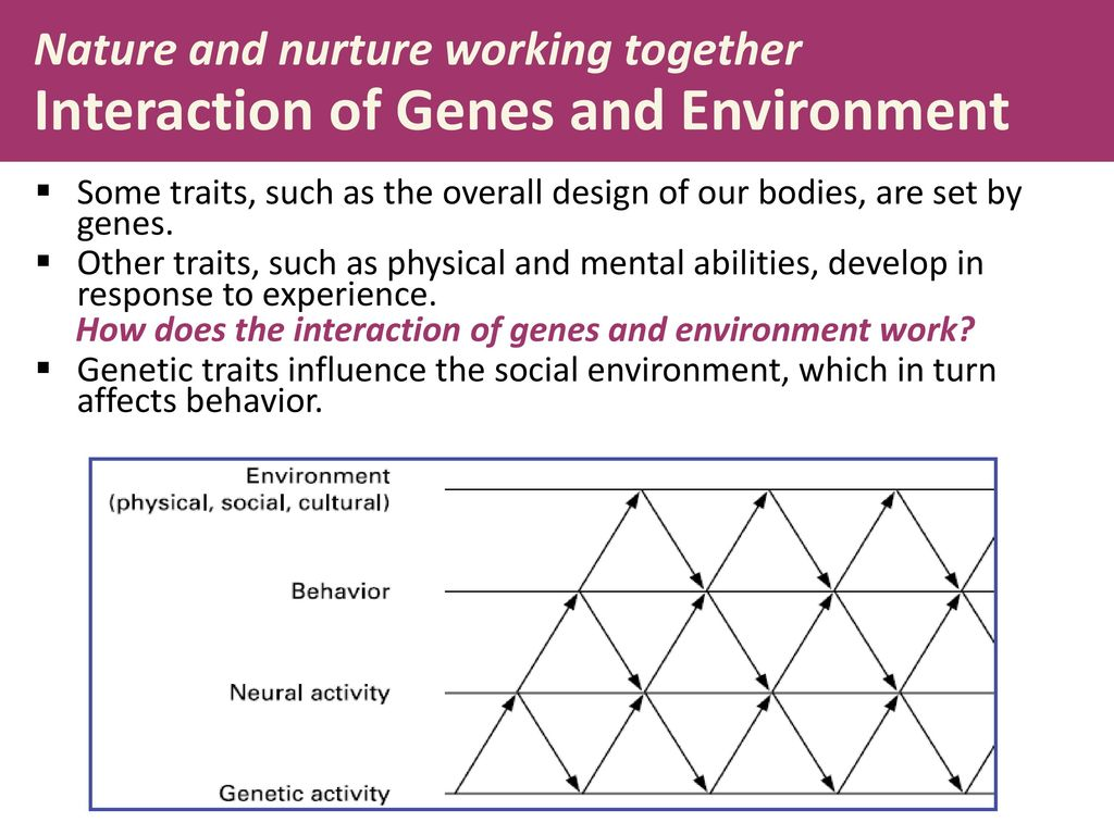 Nature Nurture And Human Diversity Ppt Download