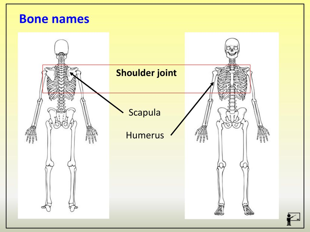 The Structure And Functions Of The Musculo Skeletal System Ppt