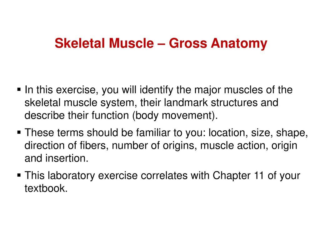 "Skeletal Muscle Gross Anatomy"" - ppt download"