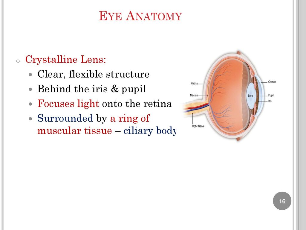 Lab 9 Human Eye Anatomy Biology Department Ppt Download