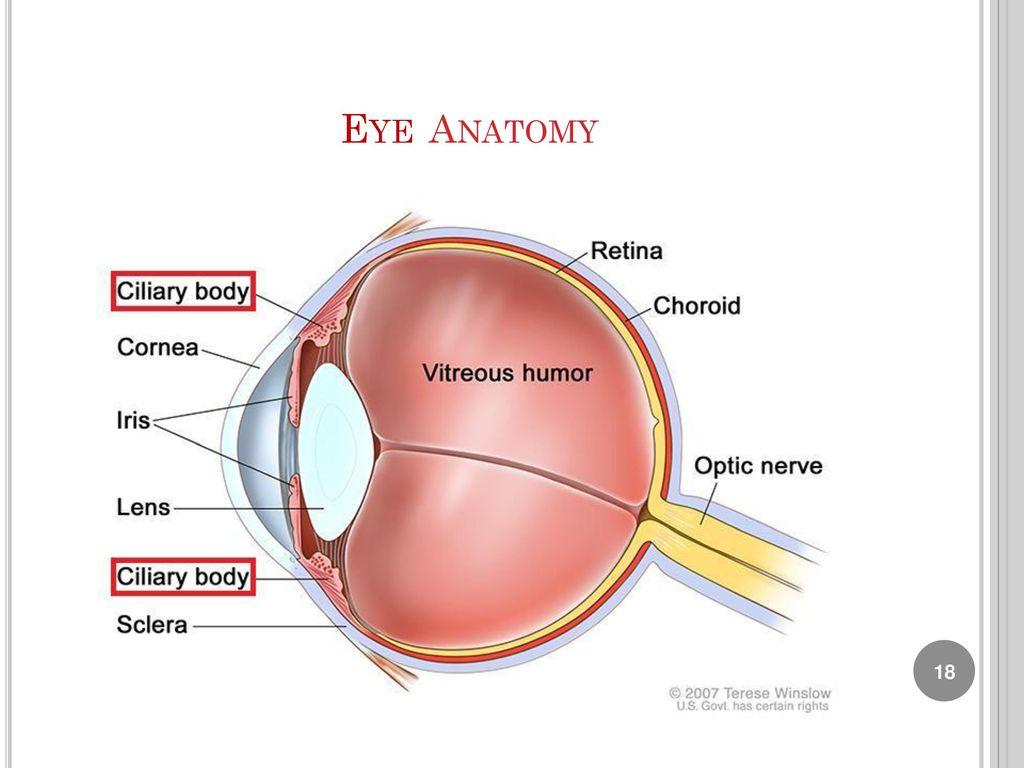 Lab 9 : Human Eye Anatomy Biology Department. - ppt download