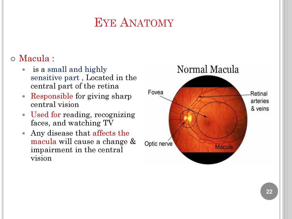 Lab 9 Human Eye Anatomy Biology Department Ppt Download