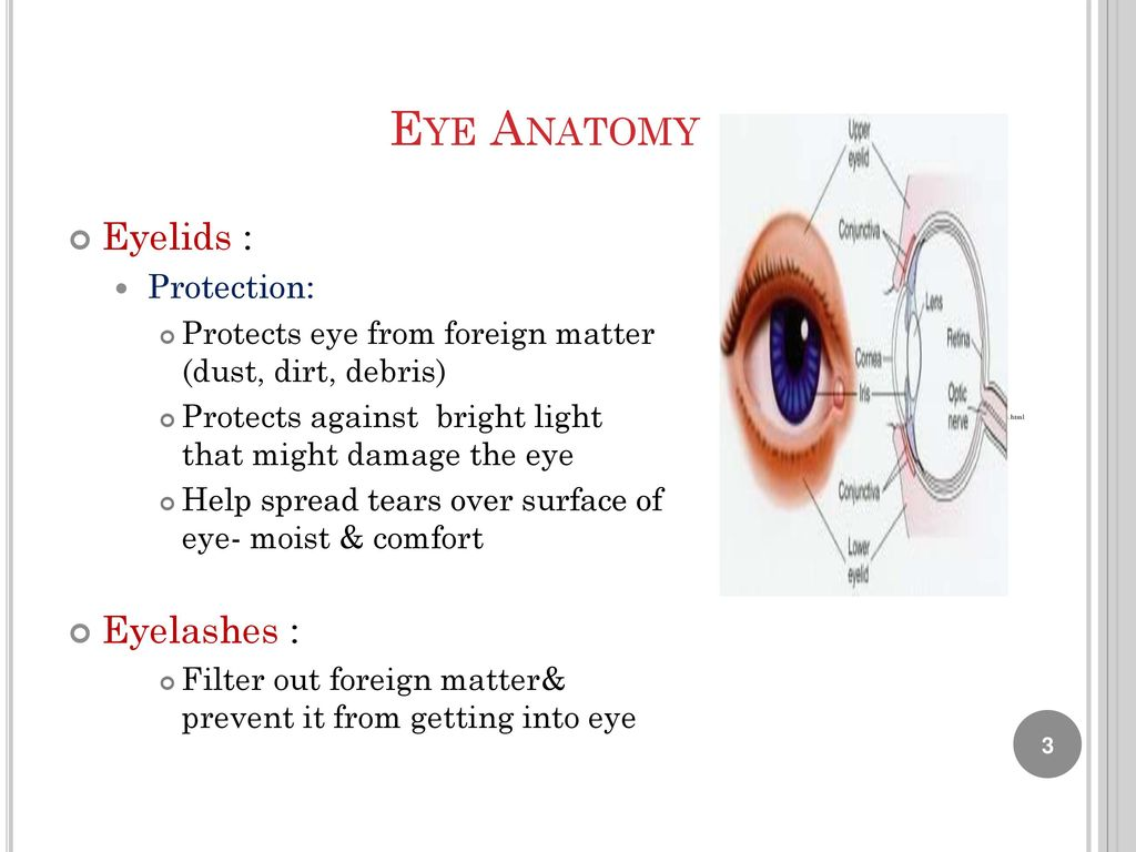 Unique Anatomy Of Human Eye Ppt Pictures Anatomy And Physiology