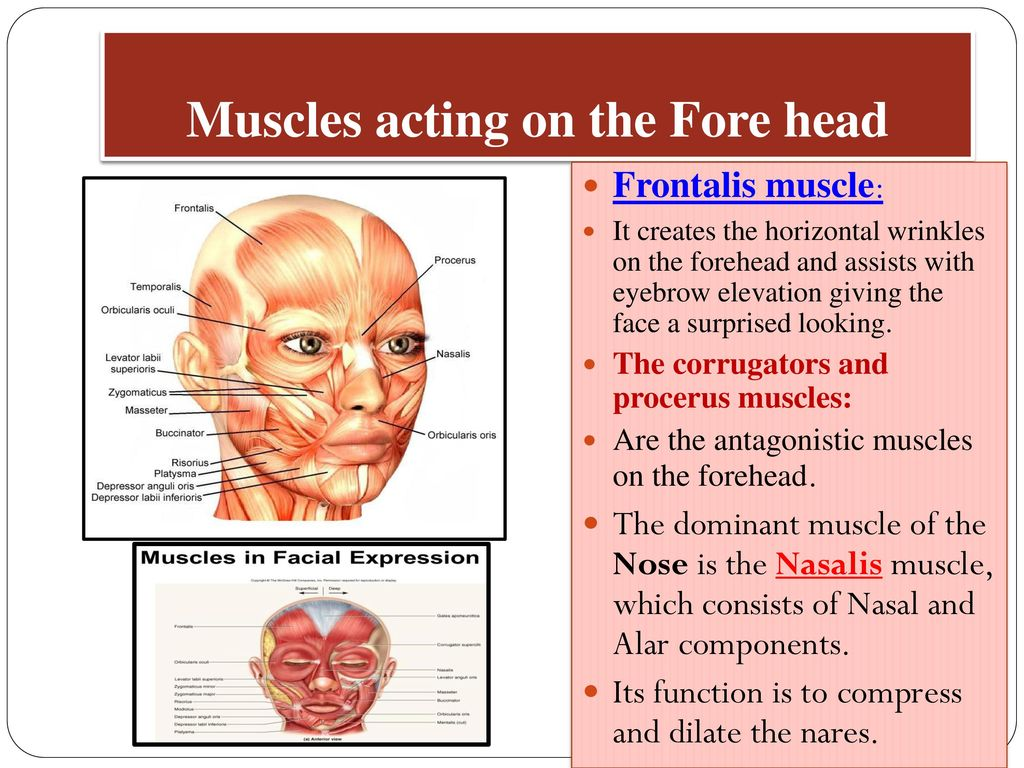 Clinical Anatomy of the Face - ppt download