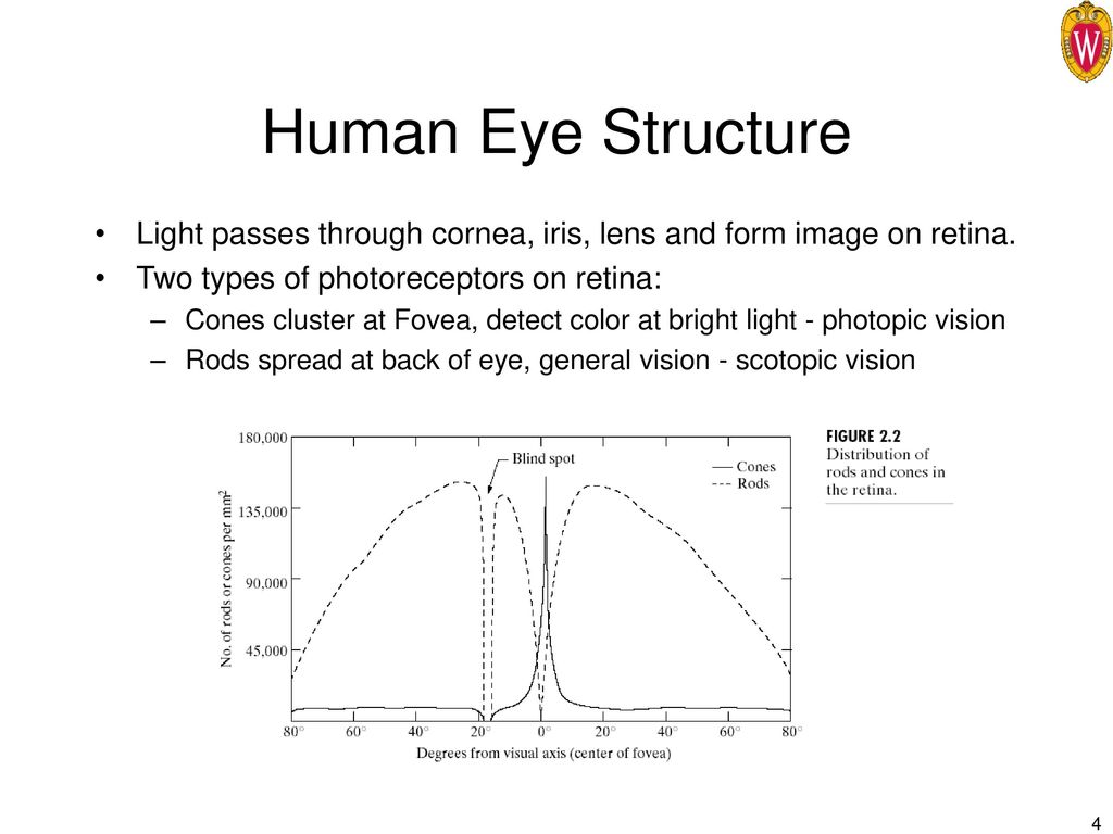 Human Visual System. - ppt download