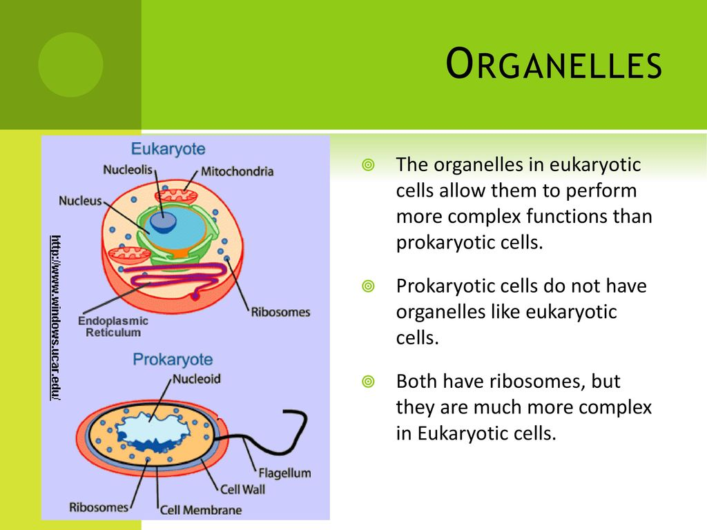 Prokaryotic Eukaryotic Cells Ppt Download Fimbriae Cell Edition Organelles The In Allow Them To Perform More Complex Functions Than