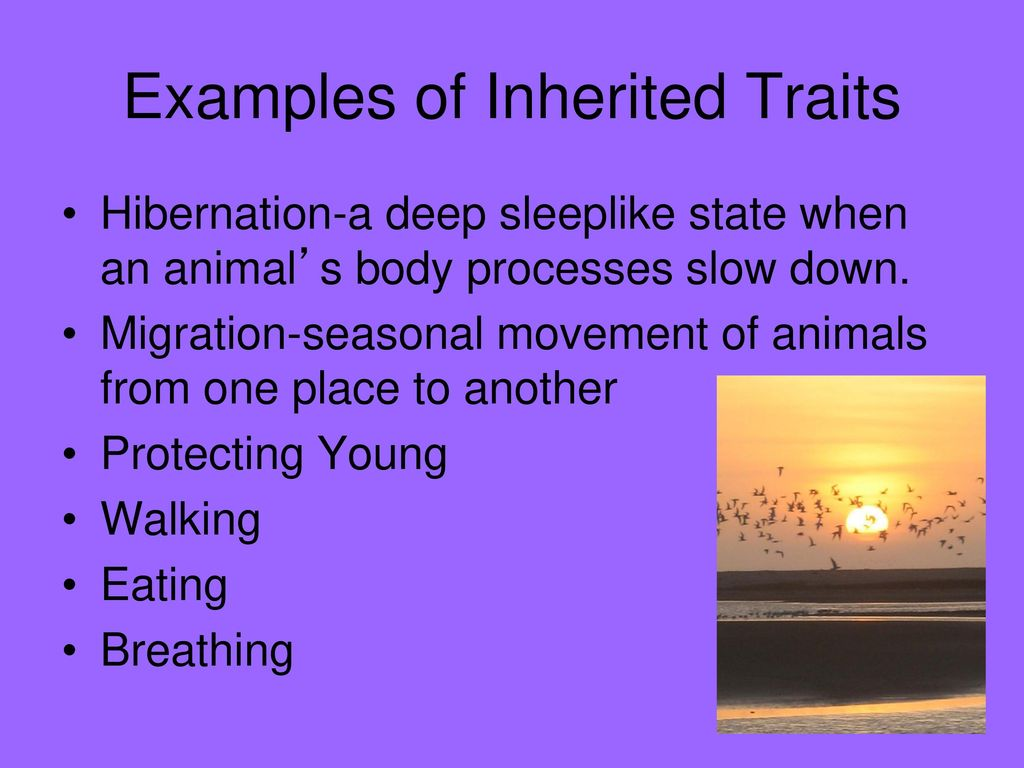 Inherited And Learned Behaviors Ppt Download