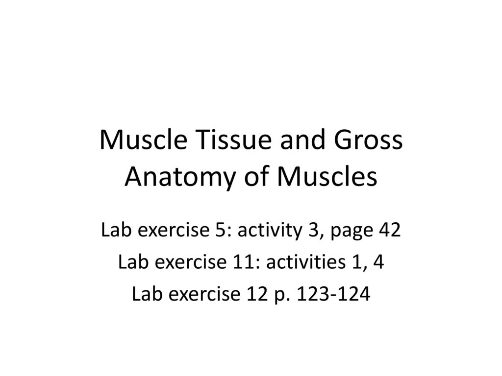Muscle Tissue and Gross Anatomy of Muscles - ppt download