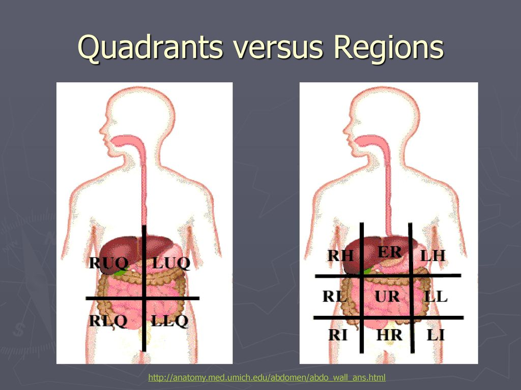 Body Planes, Directions, and Cavities - ppt download
