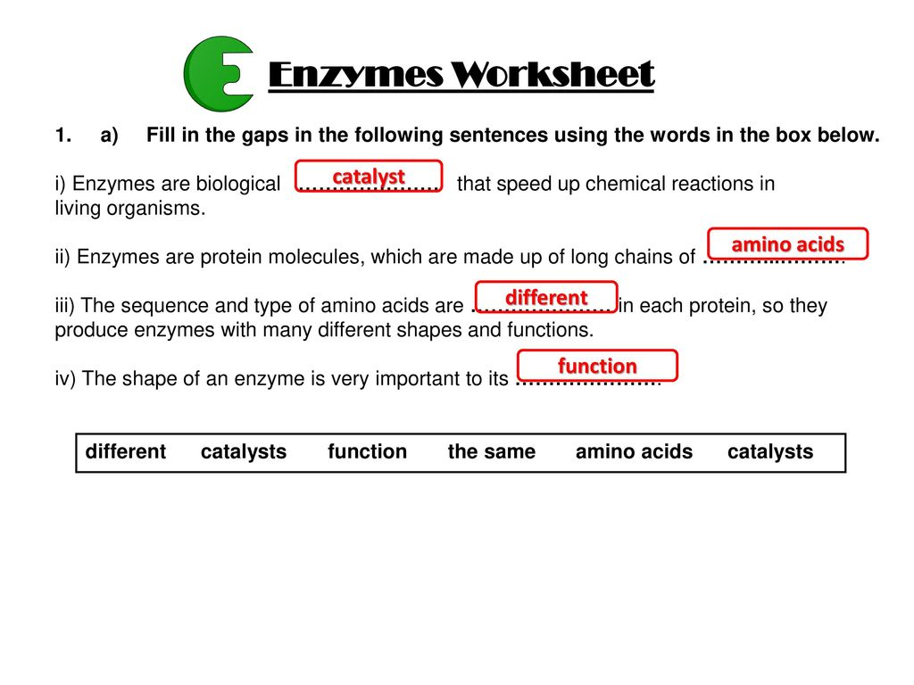 Worksheets Enzymes Worksheet enzymes worksheet catalyst amino acids different function ppt download function