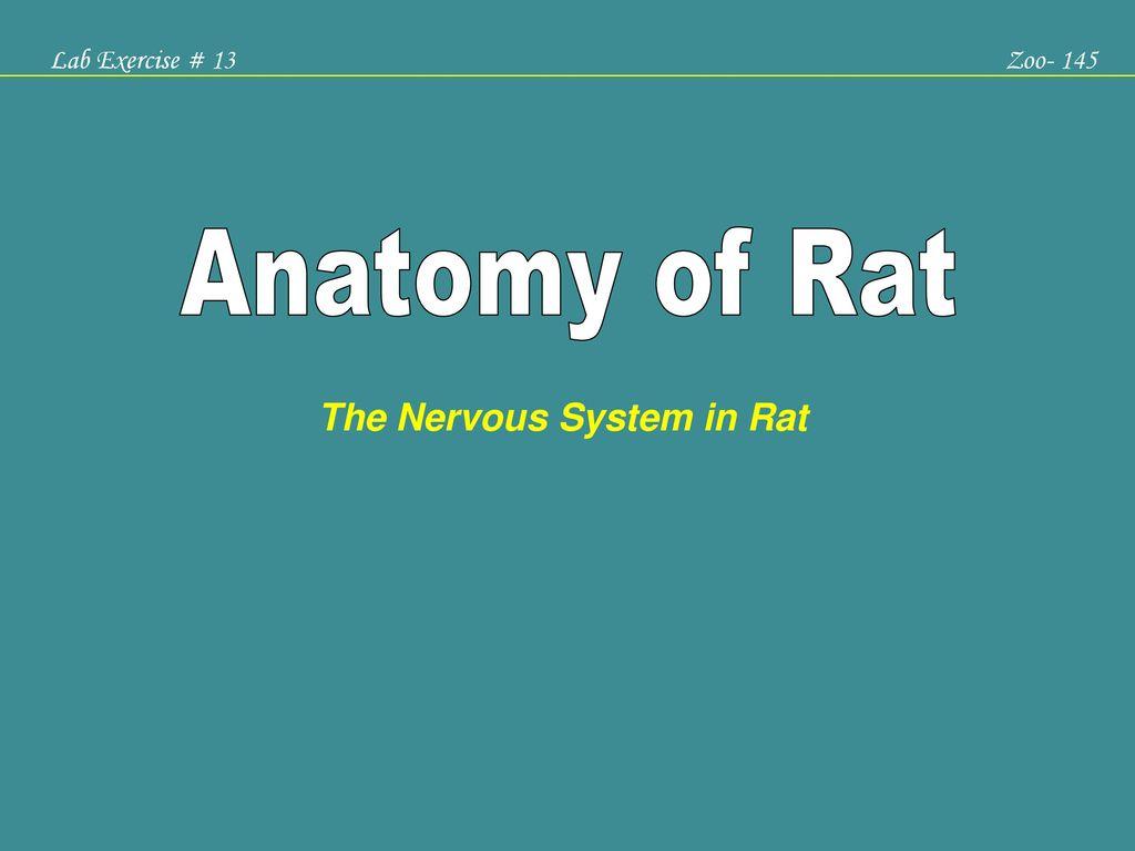 The Nervous System In Rat Ppt Download
