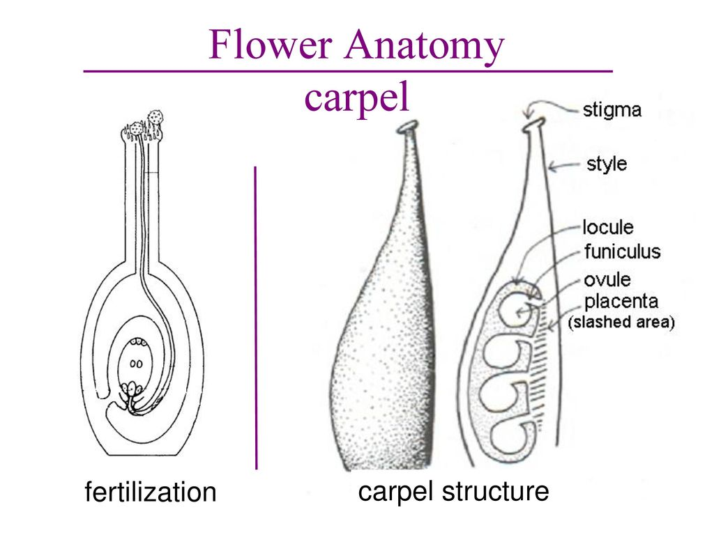 The Parts of a Flower. - ppt download