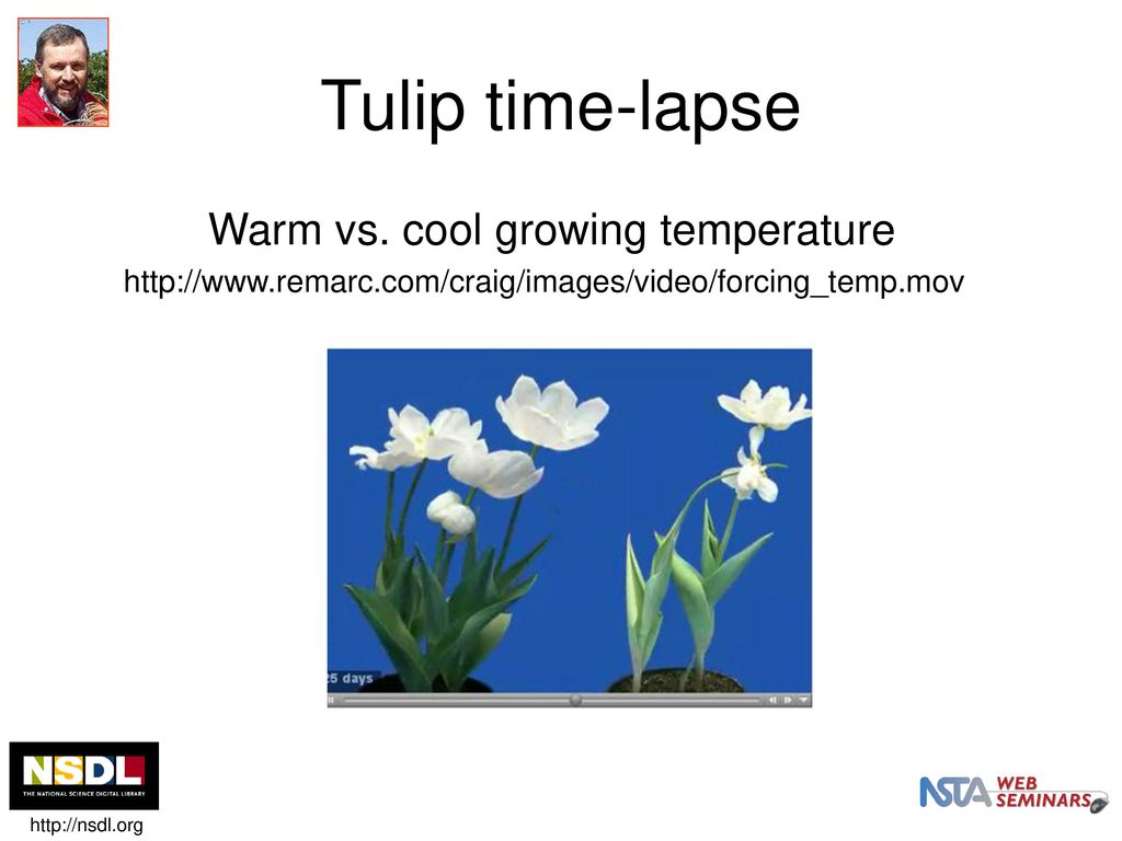Our Time Lapse Photo Sequence Tulips Go >> Nsdl Nsta Web Seminar Ppt Download