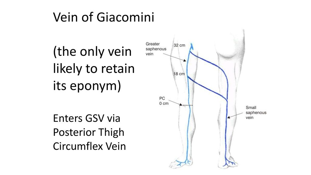 Deep and Superficial Venous Anatomy - ppt download
