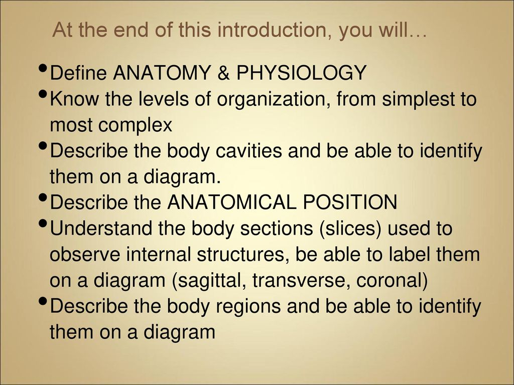 Schön Define Section In Anatomy And Physiology Zeitgenössisch ...