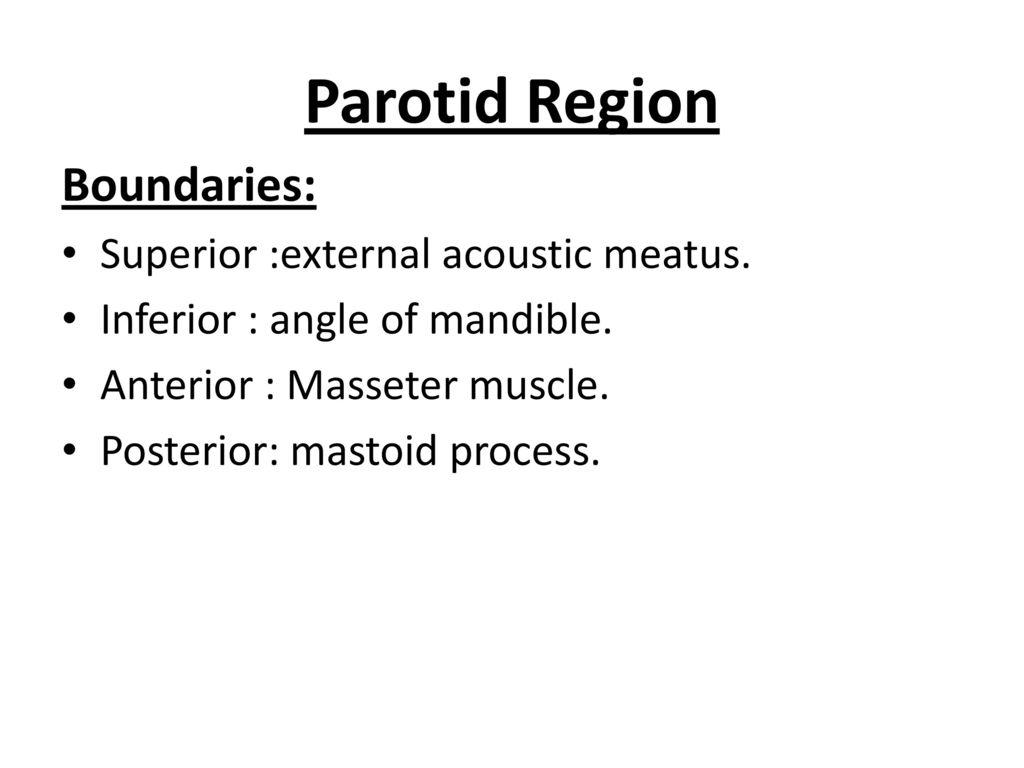 Human Anatomy تشريح / د . سيف (م7 ) ثاني اسنان موصل 7 / 12 / ppt ...