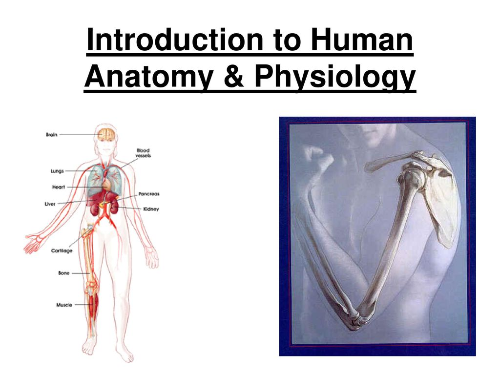 Introduction To Human Anatomy Physiology Ppt Download