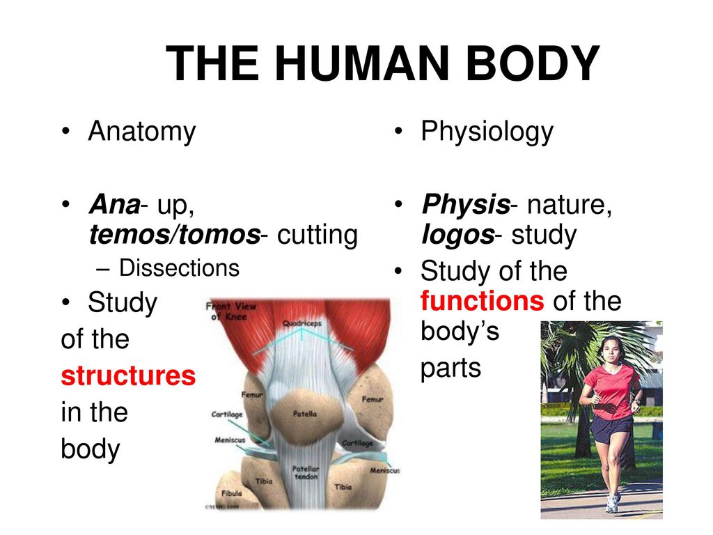 Atemberaubend Introduction To Human Anatomy And Physiology Fotos ...