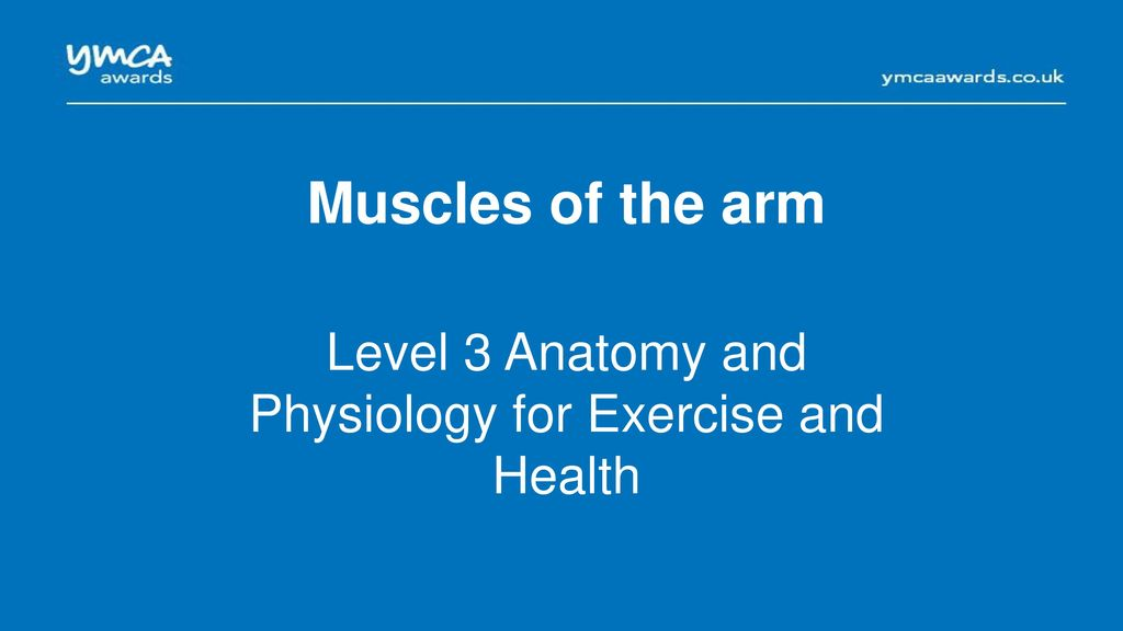 Muscles of the shoulder girdle - ppt download