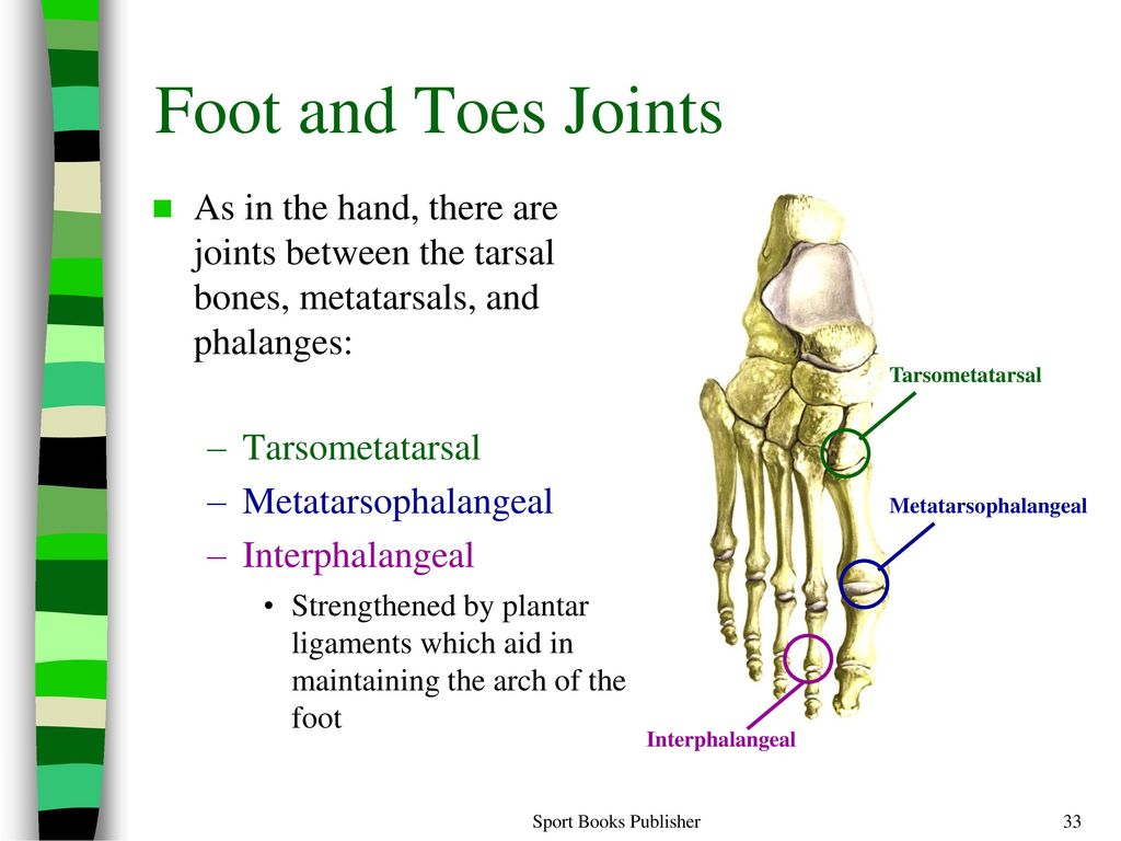 Awesome Toe Anatomy Joints Model - Physiology Of Human Body Images ...