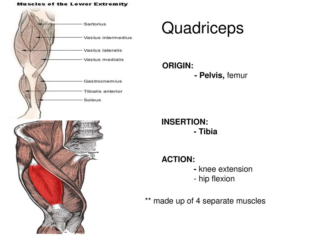 The Muscular System Unit Vi Ppt Download