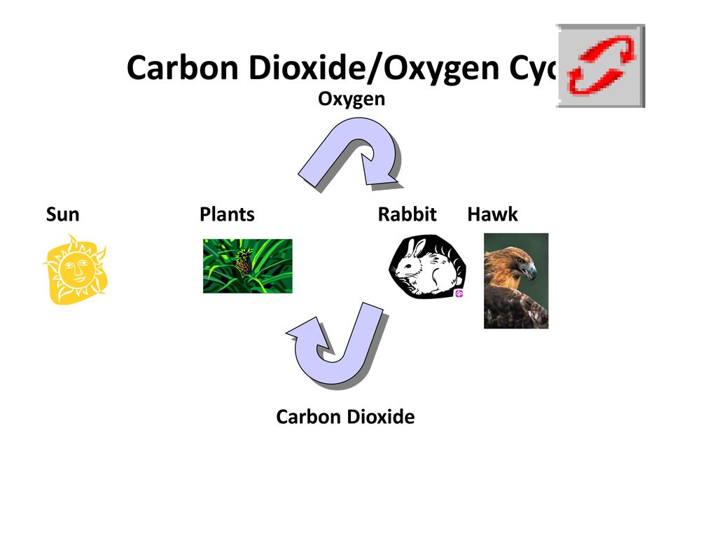 earth's natural cycles - ppt download