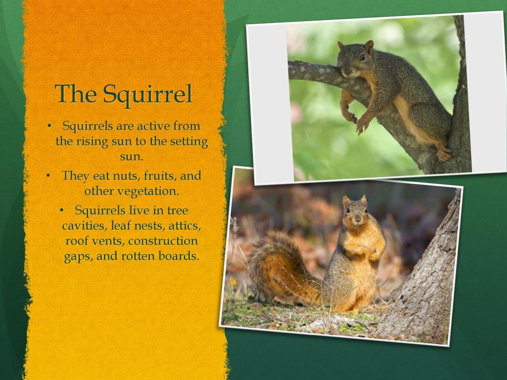 Animals From The Woods By: Jennifer Adams  - ppt download