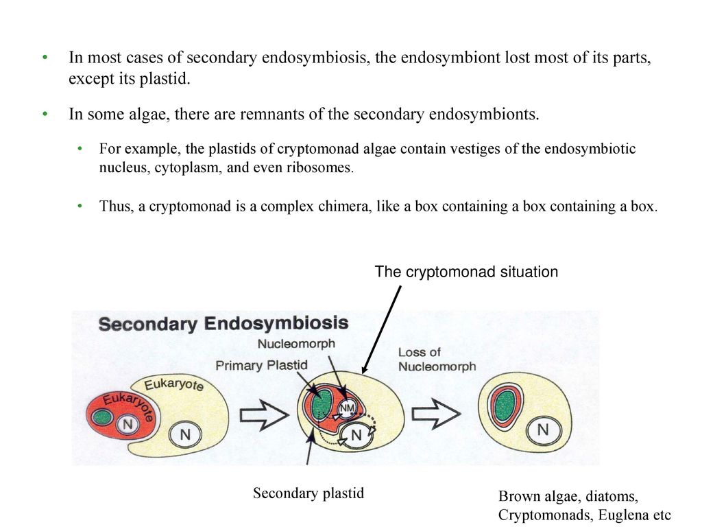 chapter 28 the origins of eukayotic diversity ppt download
