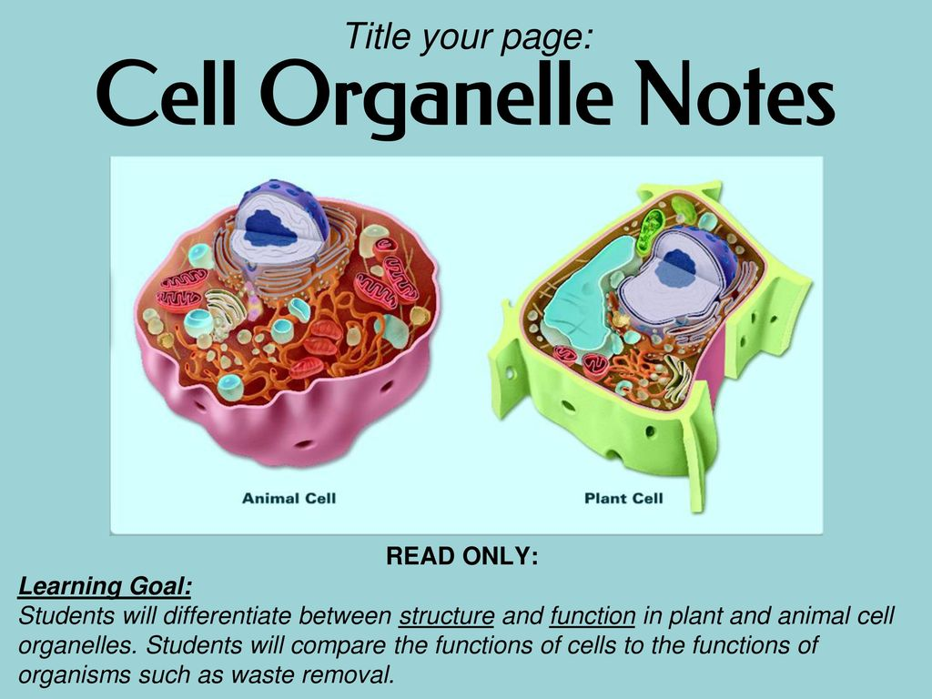 Cell Organelle Notes Title Your Page Read Only Learning Goal Viewing Gallery For Plant Structure Diagram