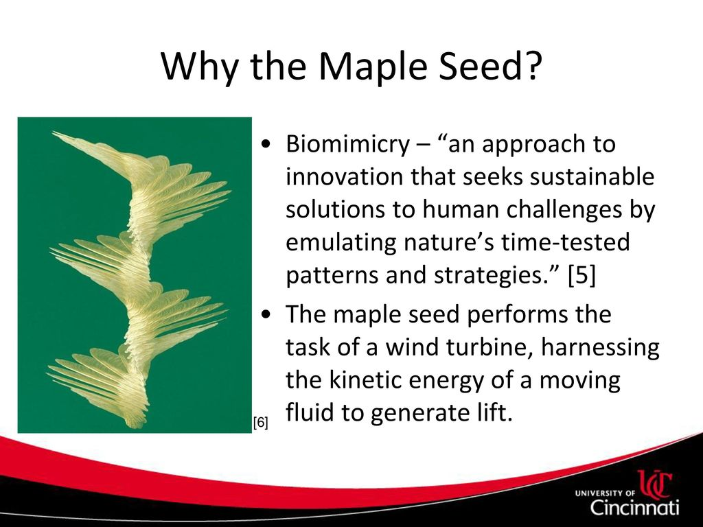 Maple Seed Performance as a Wind Turbine - ppt download