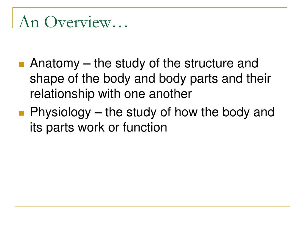 The Human Body: An Overview - ppt download