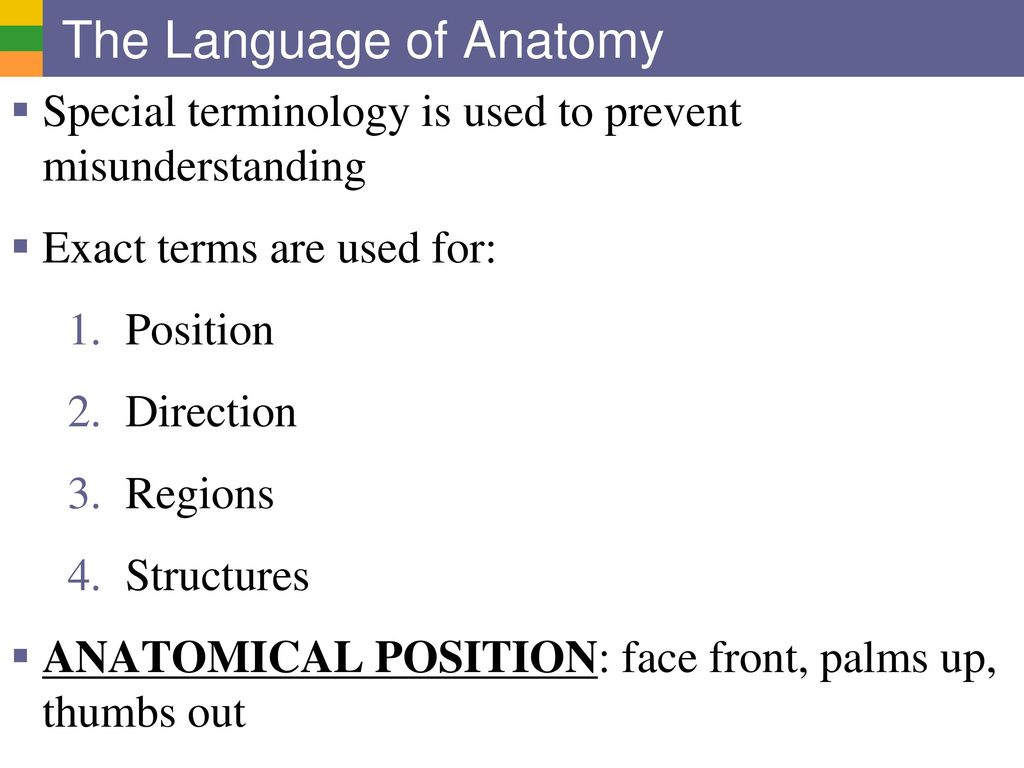 Luxury Anatomy Position Terms Frieze - Anatomy and Physiology Tissue ...