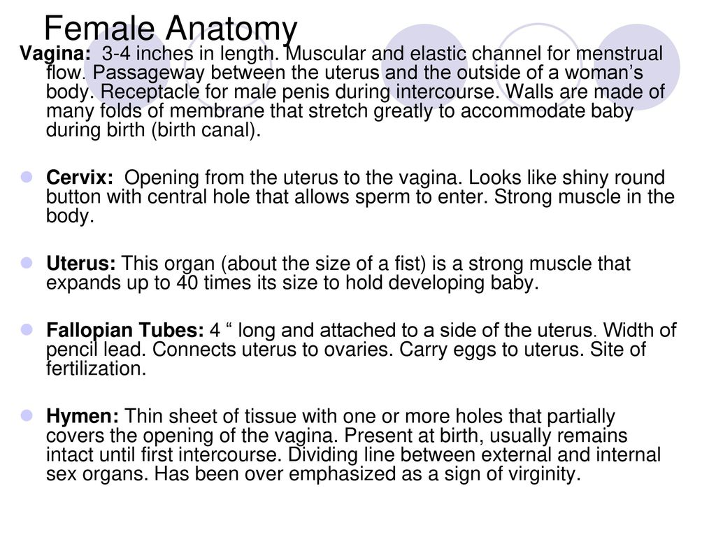 Male & Female Reproductive System - ppt download