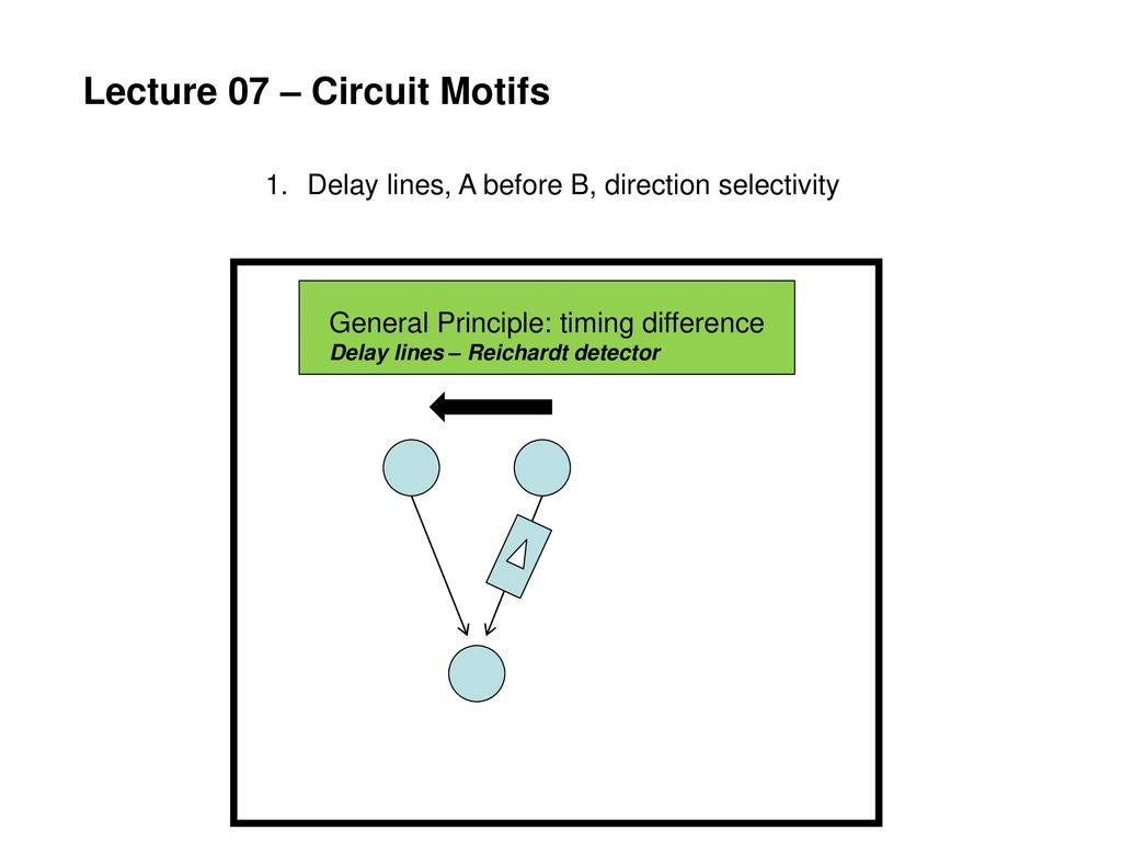 Neuroethology Electric Fish Ppt Download Delay Line Circuit 3 Lines