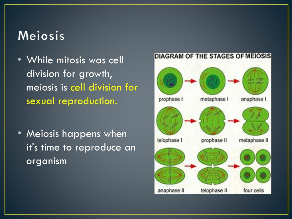 Asexual reproduction in humans possible bowl