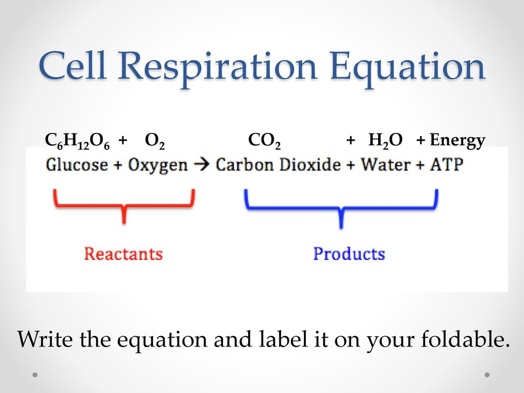 Photosynthesis And Cell Respiration Ppt Download