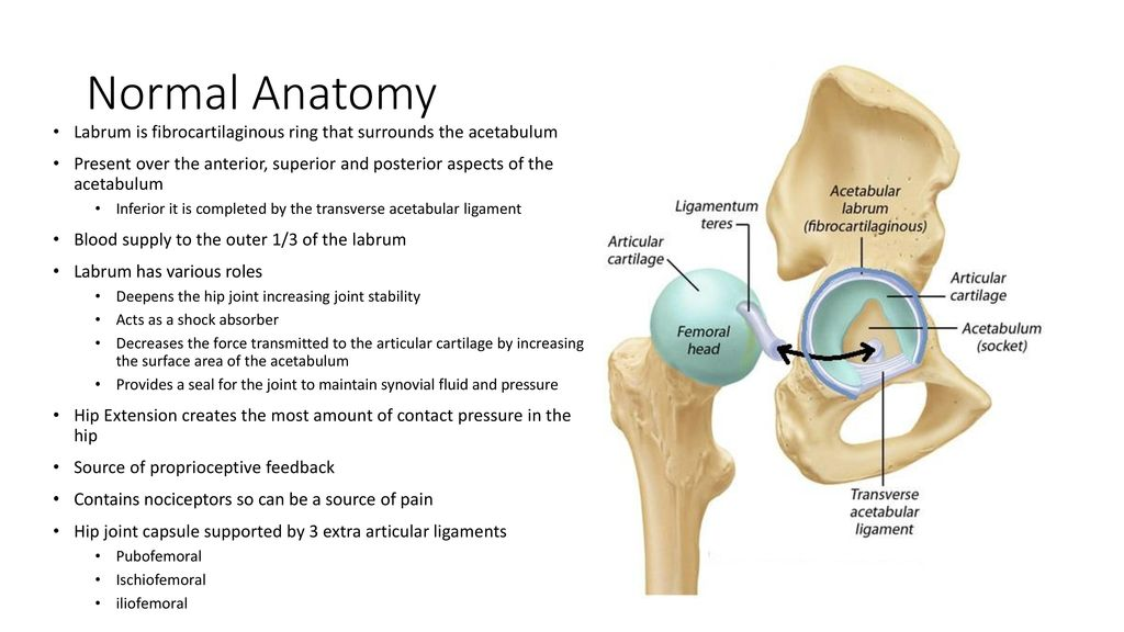 Labral Tears. - ppt download