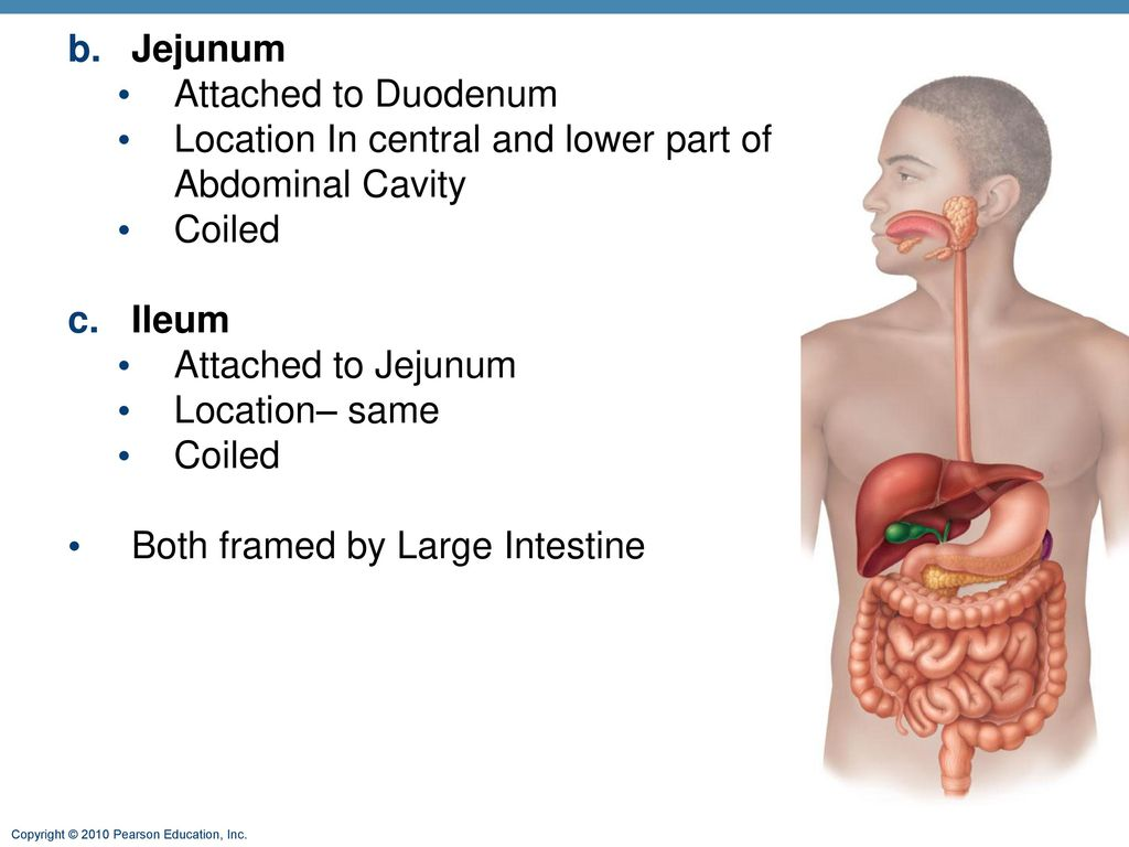 Ch 23 The Digestive System Ppt Download