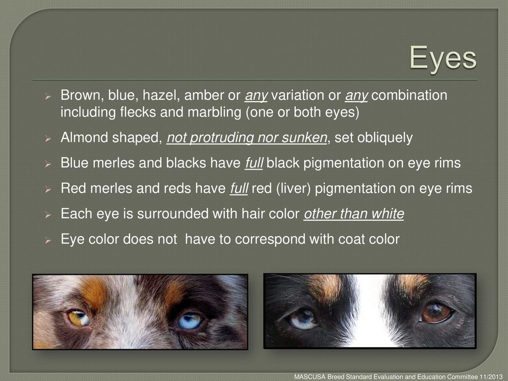 Eyes Brown, blue, hazel, amber or any variation or any combination including flecks and marbling (one or both eyes)