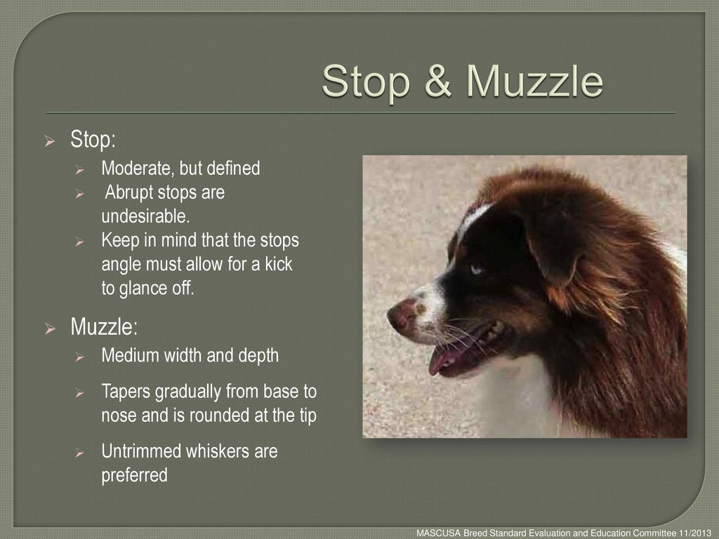 Stop & Muzzle Stop: Muzzle: Moderate, but defined