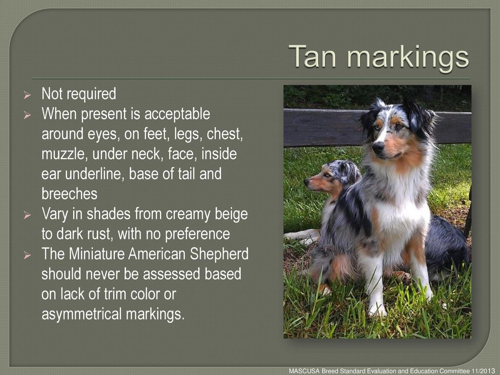 Tan markings Not required