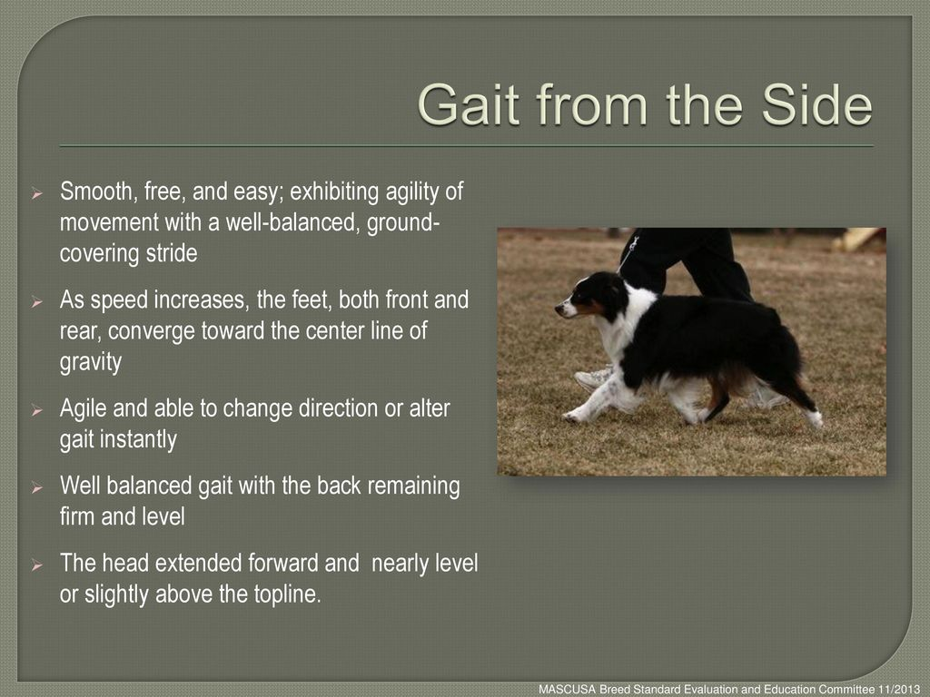 Gait from the Side Smooth, free, and easy; exhibiting agility of movement with a well-balanced, ground- covering stride.