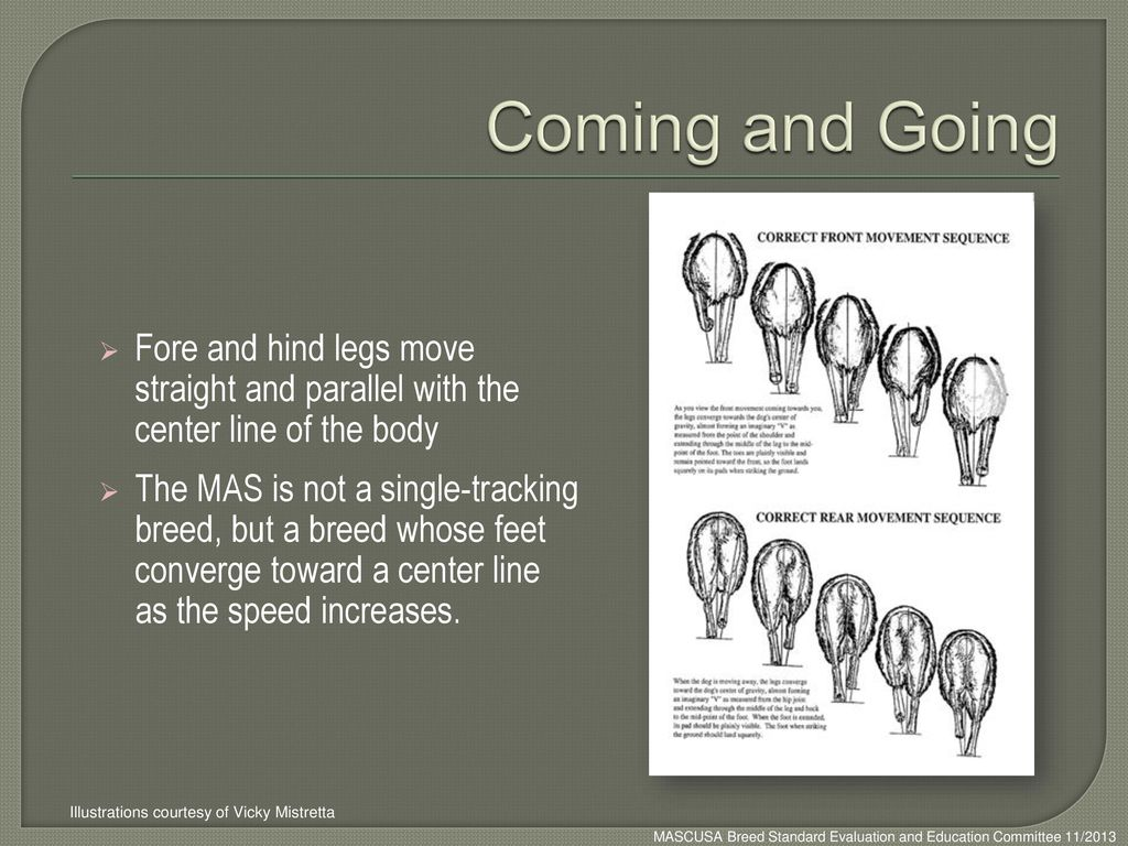 Coming and Going Fore and hind legs move straight and parallel with the center line of the body.