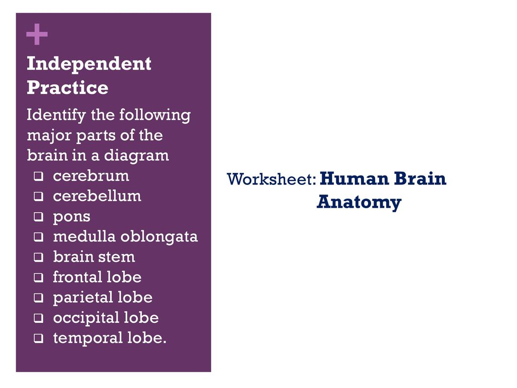 A Visual Guide to The Human Brain - ppt download