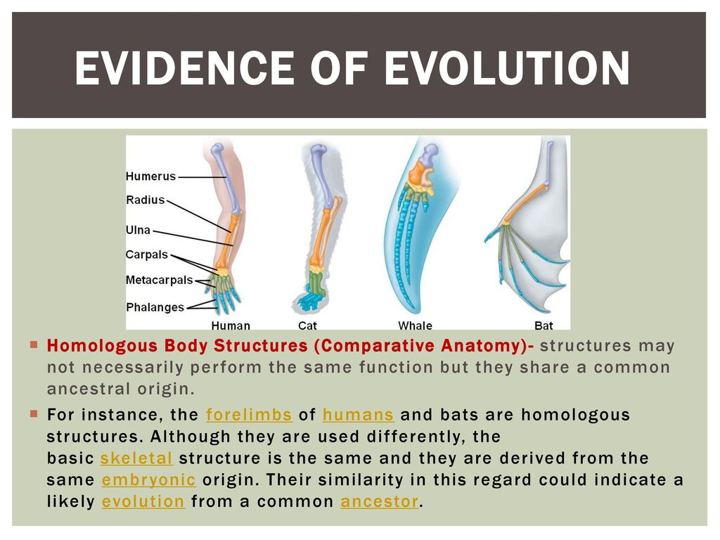 Attractive Anatomy Evidence For Evolution Model - Anatomy and ...