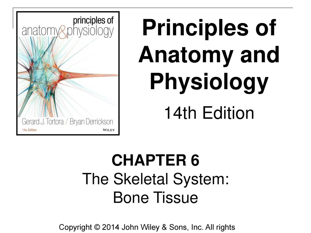 Perfect John Wiley And Sons Anatomy And Physiology Elaboration ...